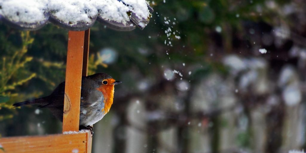 winter bird feed